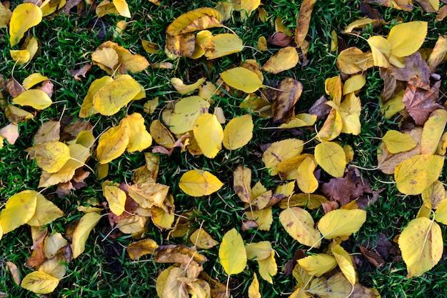 テクスチャ黄色の紅葉が緑の草の背景に落ちる Premium写真