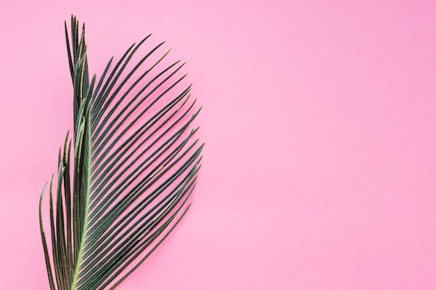 Textured leaf on pink Free Photo
