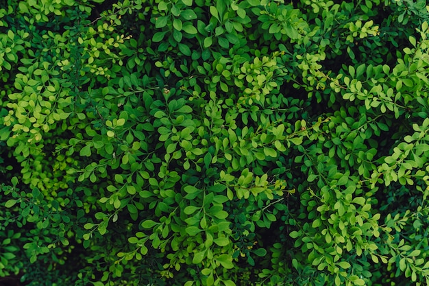 Textured natural background of many green leaves Free Photo
