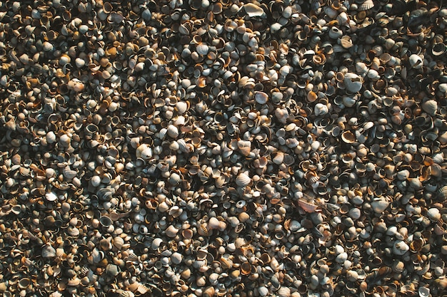 Textures of shells and sand on the sea shore Premium Photo