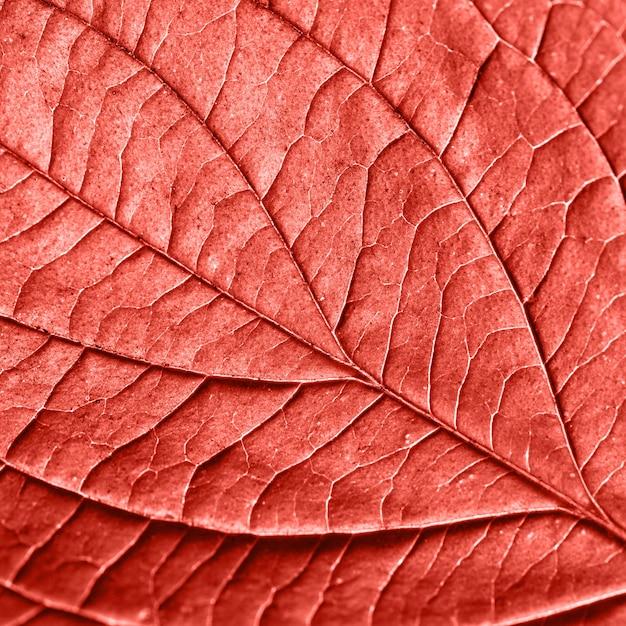 リビングコーラルの年の色でレイアウトするための柔らかく自然な葉のパターンの背景。ファッショナブルな流行色。マクロ写真。フラットレイ Premium写真