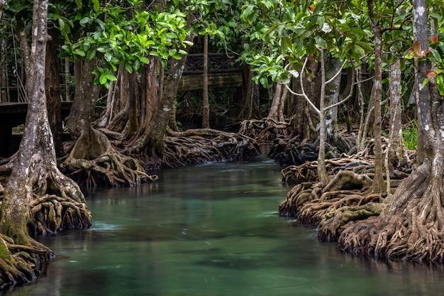Thaポンポンマングローブ林、tha pomクローンソンナムエメラルドプールはクラビ、クラビ、タイのマングローブ林で目に見えないプールです。 Premium写真
