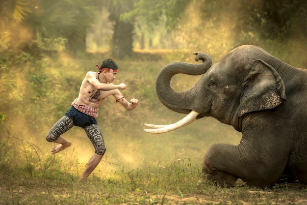 Thai boys practicing ancient boxing dances before the elephants, which is one of the arts of the thai people. Premium Photo