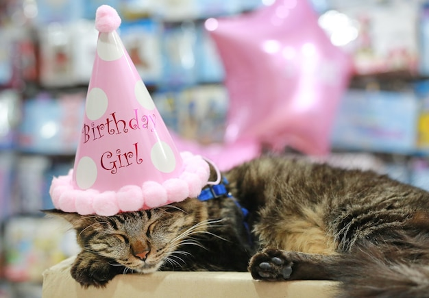 Thai Cat Sleeping With Birthday Paper Hat On Head Premium Photo