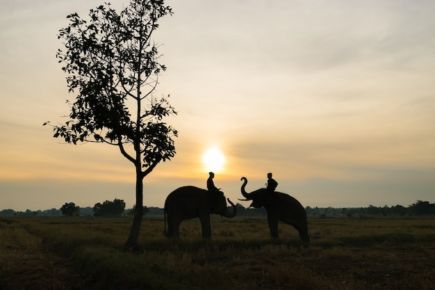 Thai elephant silhouette Premium Photo