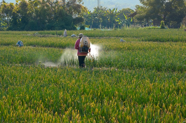 Thai farmers are spraying insecticides in vegetable plots Premium Photo