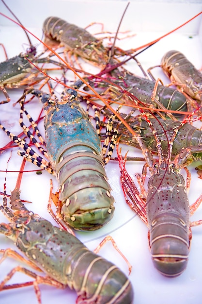 Thai lobster, seafood, market, thailand Premium Photo