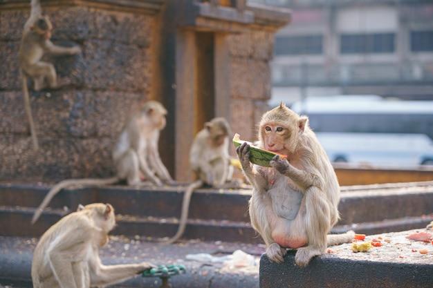 A thai monkey or crab-eating macaque, macaca fascicularis raffles in thailand Premium Photo