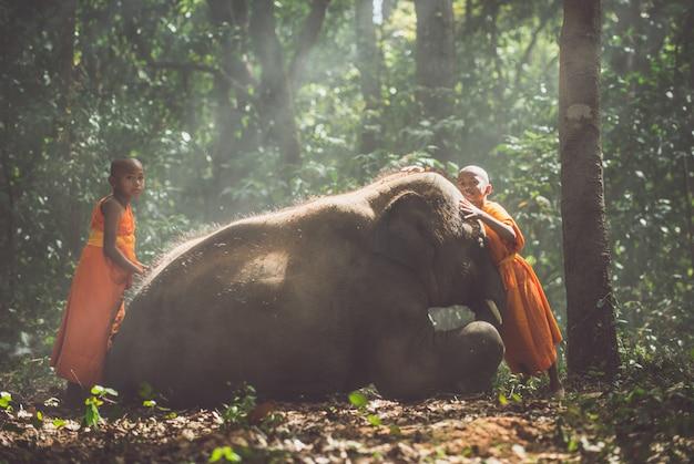 Тайские монахи гуляют в джунглях со слонёнками Premium Фотографии