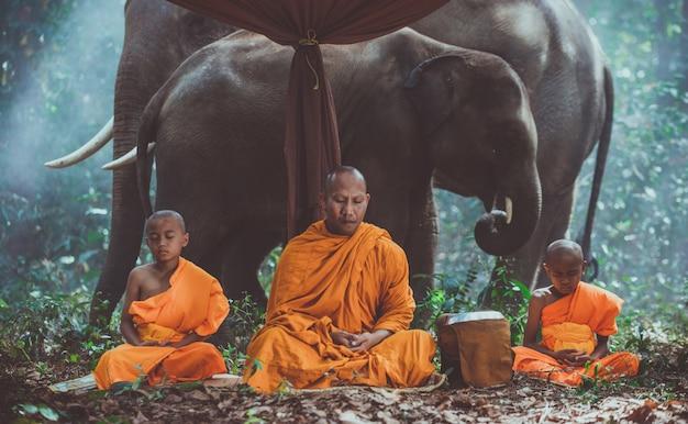 Тайские монахи гуляют в джунглях со слонами Premium Фотографии