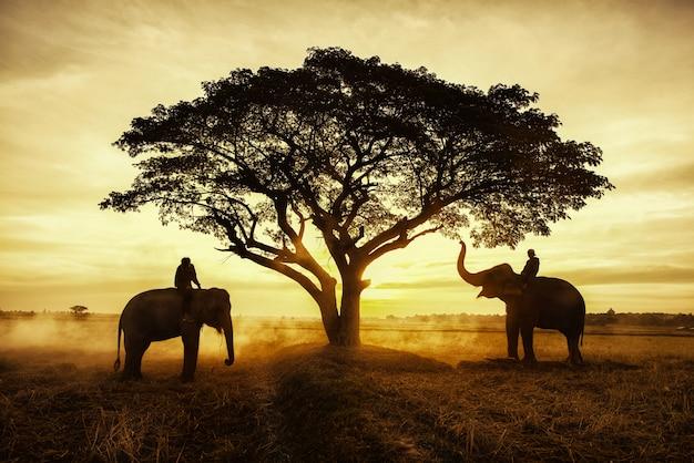 Сельская местность таиланда; силуэт слона на фоне заката Premium Фотографии