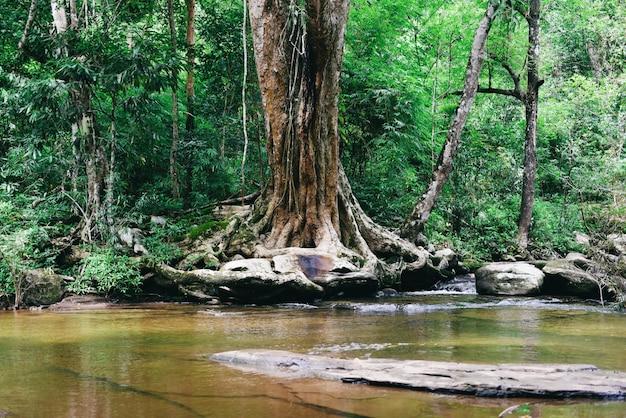 Thailand river stream forest Premium Photo