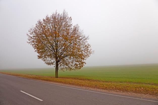 가을 길-가을 시즌의 작은 길 프리미엄 사진