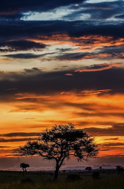 サバンナの夕日の背景 Premium写真