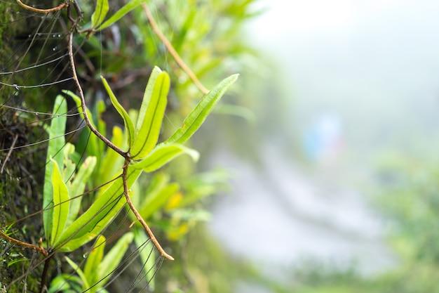Красота зеленой природы в тропическом лесу Premium Фотографии