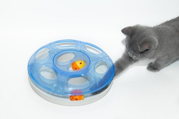 Кошка играет с игрушкой. занятие домашних животных. Premium Фотографии