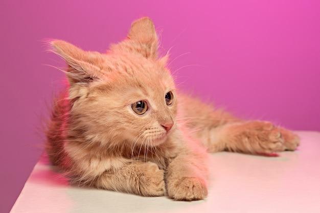 Кот на розовой стене Бесплатные Фотографии