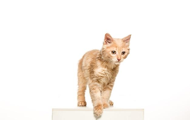 白い背景の上の猫 無料写真
