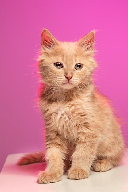 ホワイトスペースの猫 無料写真