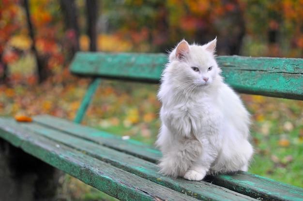 猫は秋にベンチに座っています Premium写真