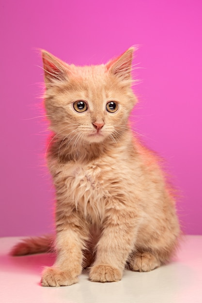 Кот сидит в одиночестве Бесплатные Фотографии