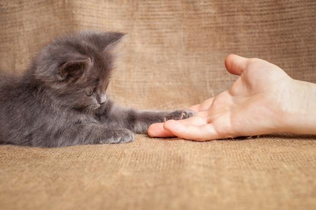 猫が足を伸ばして男の友情愛ペット子猫が男の友情を信頼する Premium写真