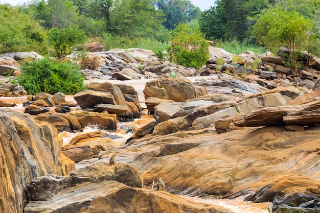Побережье реки тана между парками меру и кора африка Premium Фотографии