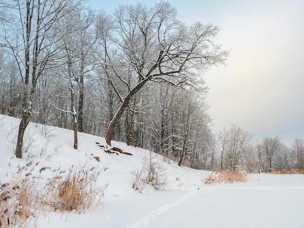 Береговая линия заснеженного озера с красивыми наклонными деревьями. зимний снежный пейзаж. Premium Фотографии