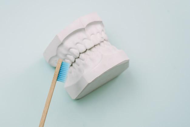 Понятие о том, как правильно чистить зубы. бамбуковая зубная щетка лежит на синем фоне и рядом с гипсовой моделью человеческой челюсти. уход за полостью рта ортодонт. Premium Фотографии