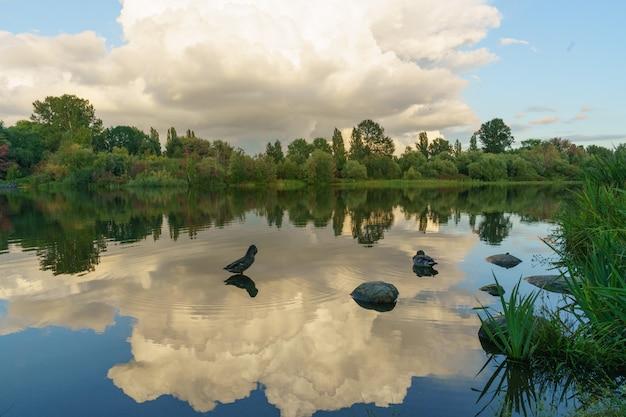 Утки плавают в озере с отражениями облаков в воде Бесплатные Фотографии