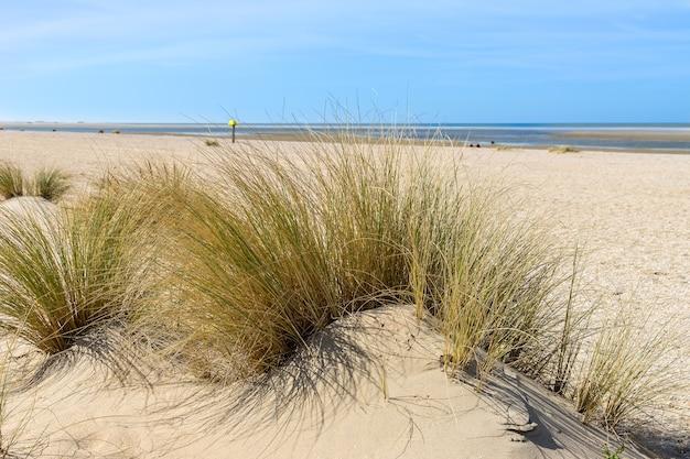 2020年春の空のビーチ#1 無料写真