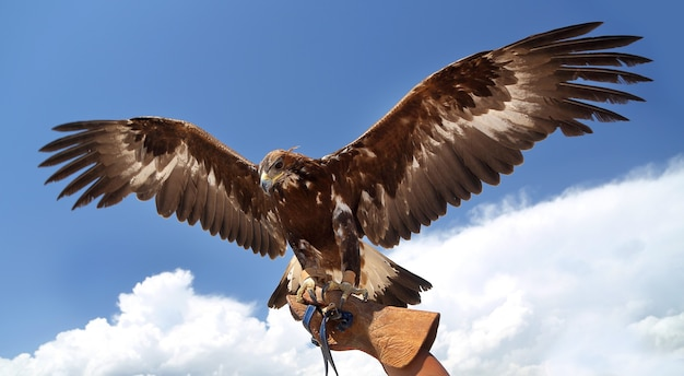 ファルコンは青空に翼を広げた。 Premium写真