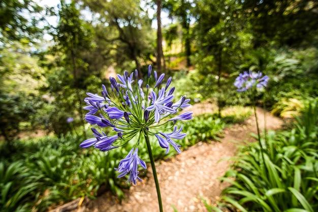 ポルトガル、マデイラ島フンシャルの有名な植物園 無料写真