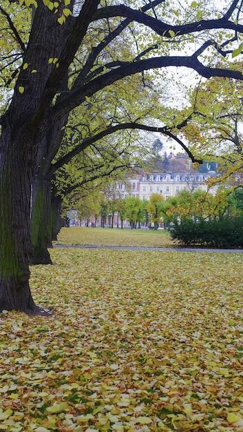 地面は秋に木々から落ちる黄色の葉で覆われています。 Premium写真