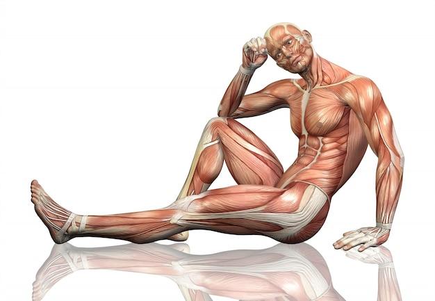 3d визуализации сидит мужской фигуры с подробной картой мышц Бесплатные Фотографии