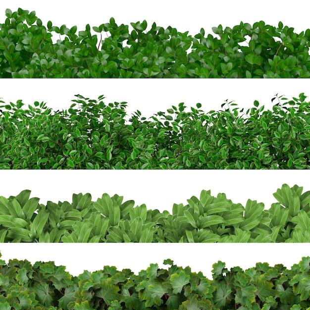 Зеленая граница Бесплатные Фотографии