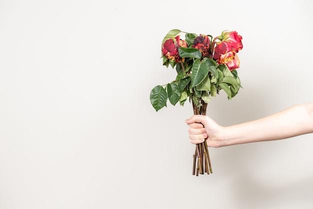 男の手は枯れた花の花束を差し出します。乾燥した赤いバラとスペースのコピー Premium写真