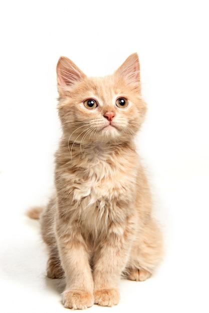 Красный или белый кот я на белой студии Бесплатные Фотографии
