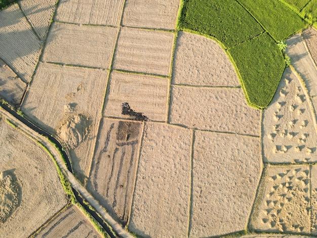 田んぼが収穫されています Premium写真