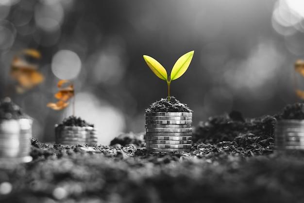 Саженцы растут на монетах, думая о финансовом росте. Premium Фотографии