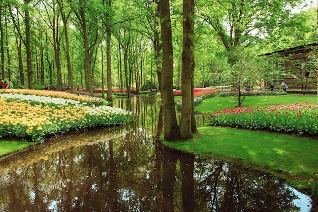 オランダまたはオランダのチューリップ畑 無料写真