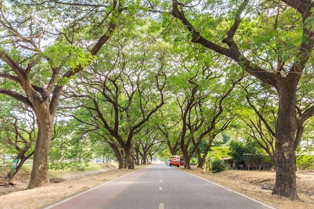 아유타야 역사 공원, 아유타야, 태국에서에서 나무의 터널. 프리미엄 사진