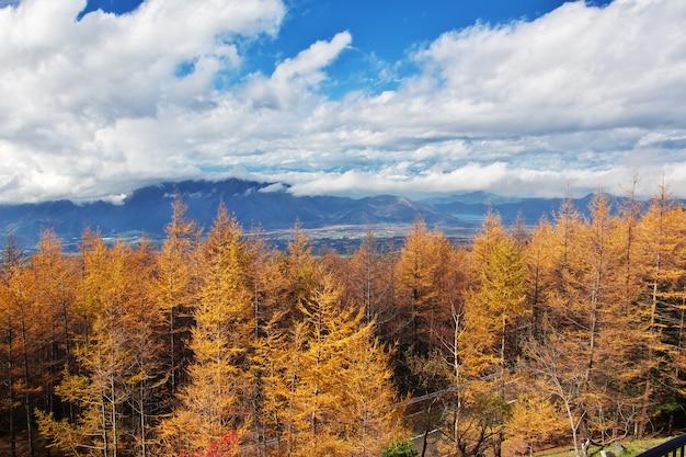 Вид на национальный парк фудзи осенью, япония Premium Фотографии