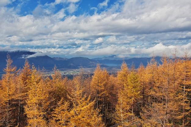 Вид на национальный парк фудзи на осень, япония Premium Фотографии