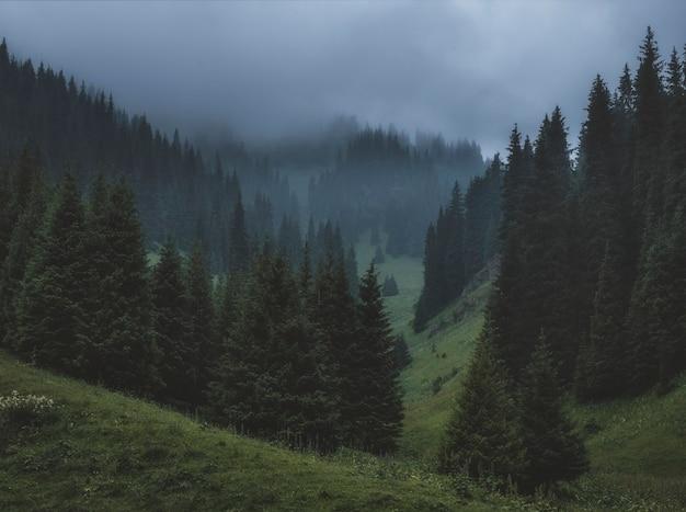 Густой туман в еловом лесу в темных горах Premium Фотографии