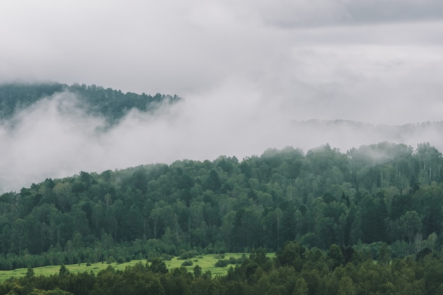 Thick fog in mountains with copy space on mist. vintage foggy landscape of majestic nature in faded green tones in hipster style. opaque haze among hills. Premium Photo