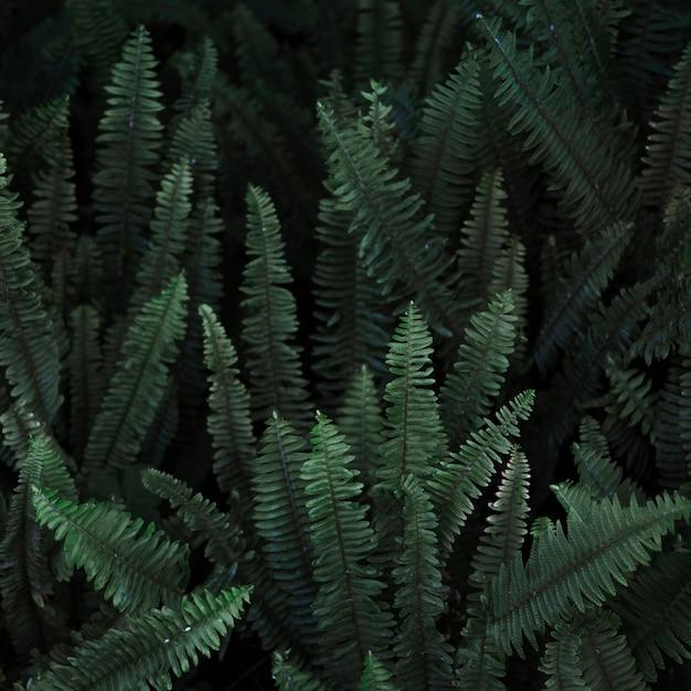 Thicket of wild fern Free Photo