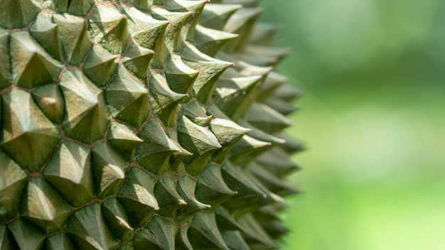 Thorns of durian close-up beautiful see the details of thorns. Premium Photo