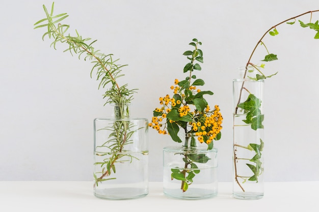 Three different type of twigs in the glass vase against white background Free Photo
