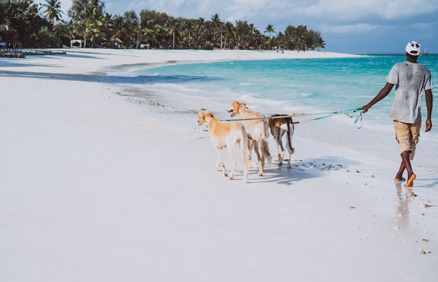 Three dogs walking on the coast of an indian ocean Free Photo